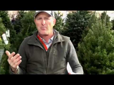 Cut Christmas Trees and Greens