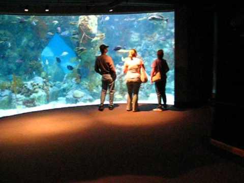 ABQ Biopark (Albuquerque) Aquarium 2 minute speed run