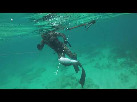 Balon Balığı Saldırısı-Fugu Fish Attack Cyprus (Karpaz)