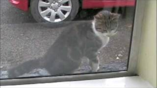 Kitty cat in Ireland 2007