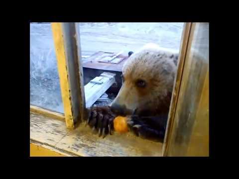 Friendly Russian Bear