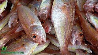 Konzumace ryb a diabetes mellitus