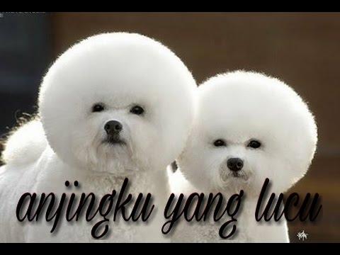 41++ Gambar anjing lucu warna putih terbaru