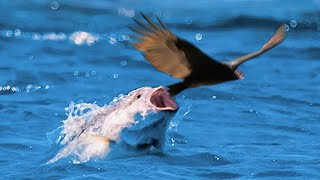 This Fish Is Hunting Birds