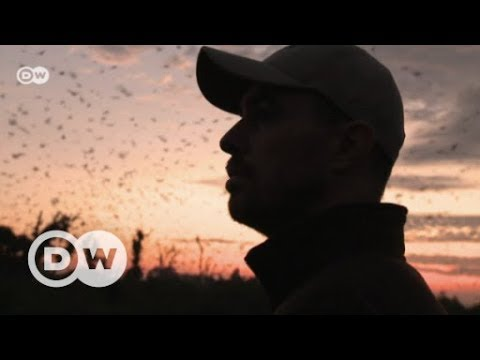 Flight of the fruit bat to Zambia | DW English