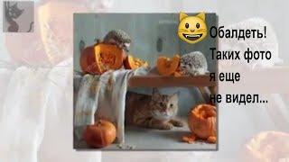Забавные Ежики, Хомяки и Кошки от Елены Ереминой. Фото. Милота зашкаливает