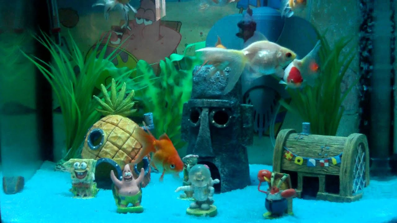 Spongebob squarepants fish tank setup youtube for Aquarium decoration set
