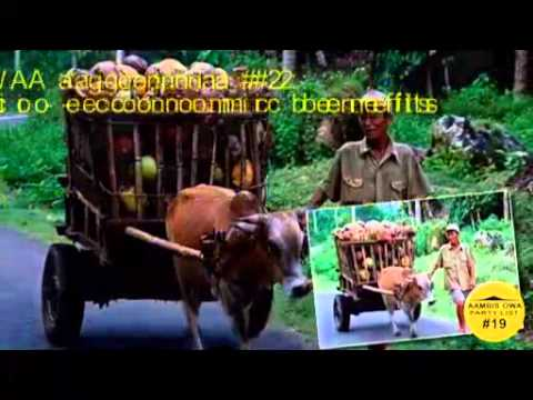 The State of the Coconut Farmers in the Philippines