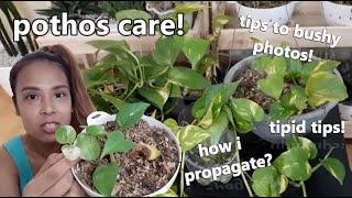 SEKRETO SA PAGPAPARAMI NG PHOTOS PLANTS! || Tipid Tips Sa Pagpaparami
