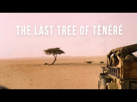 Last Tree of Ténéré | 100 Wonders | Atlas Obscura