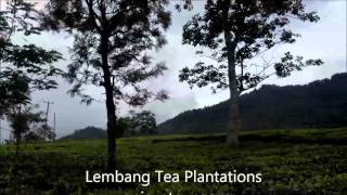 Bandung volcano at Lembang Tea Plantations - Tangkuban Perahu Tour - Ciater Hot Spring