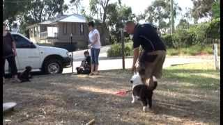 How To Stop Your Dog Pulling On Leash - Puppy School Training In Melbourne