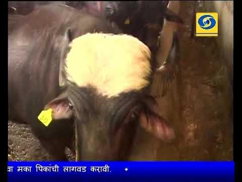 Krishidarshan 28 February 2018 - शेतीपूरक दुग्ध व्यवसाय