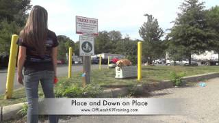 """8-month Old Lab """"tippet:"""" Amazing Before And After Video! Lab Training In Virginia"""