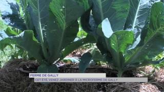 Ferme de Gally : cet été, venez jardiner à la MicroFerme de Gally