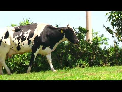 LOTE 16   1907 AG