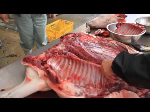 【心臓が弱い方は観ないで】『神業』イノシシ捌き アバラ、吊るし、食べる編 出版しました。心臓を直視する衝撃動画URLをコピペ➡https://youtu.be/TT7x3cPuQrw