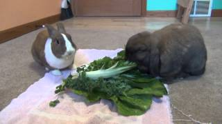 How to get a rabbit to come when called.