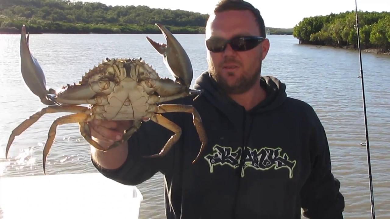 Catching Huge Mud Crabs