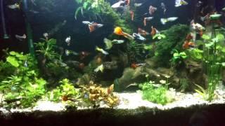 Селекция ГУППИ. Видеонарезка. Ноябрь 2016.Аквариумные рыбки.(Это нарезочка из разных остатков видео, которые не вошли в основные видеоролики. Дизайн аквариума с разной..., 2016-11-19T20:33:37.000Z)