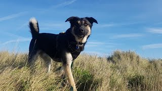 Lupin - Romanian Rescue Dog - 3 Weeks Residential Dog Training