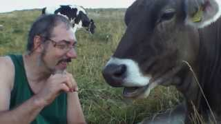 cute and funny Cow -mucca simpatica - avvicinandola piano, piano...