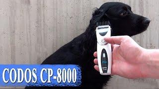 CODOS CP-8000 –🐾 машинка для стрижки домашних животных - груминг(, 2017-03-28T19:47:03.000Z)
