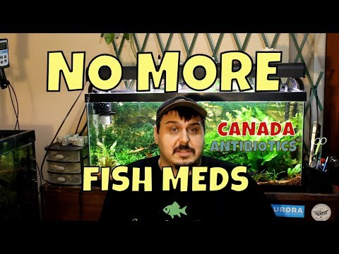 We Are Losing Our Fish Medications | Antibiotic Resistant Bacteria