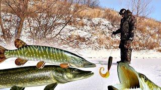 Сосед рыбак научил ловить щуку на силикон зимой! Вот главный секрет ловли щуки на силикон со льда!