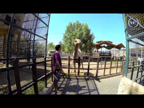 Emirates Park Resort ZOO