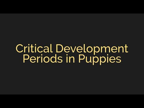 Critical Development Periods in Puppies with Michael Ellis