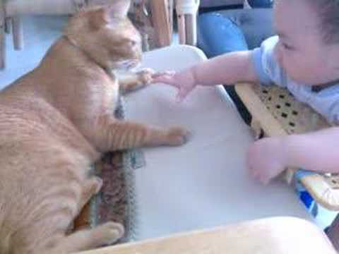 Baby cry when the cat starts to leave