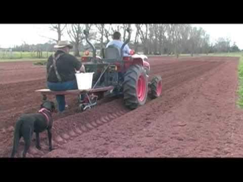 Planting Sweet Corn Home Vegetable Garden