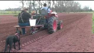 Planting Sweet Corn - Home Vegetable Garden