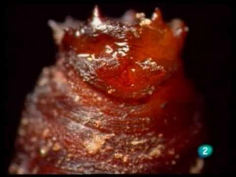 documentales de insectos de la 2 tve,television española 1 parte