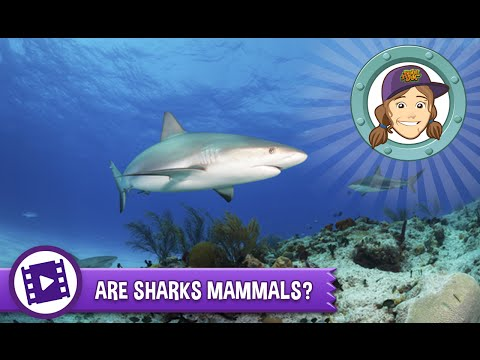 Ask Tierney - Are Sharks Mammals?