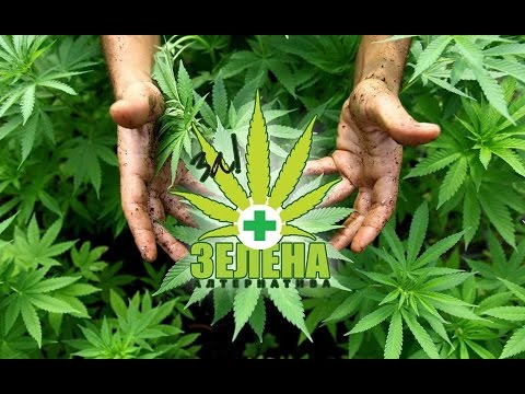 Robert Melamede | MKD Subtitles | Demystifying Cannabis in Macedonia 2014