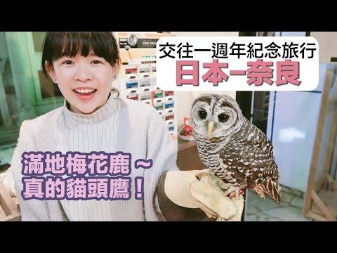 情侶週年紀念旅行#2【日本-奈良】和真的貓頭鷹互動❤︎古娃娃WawaKu