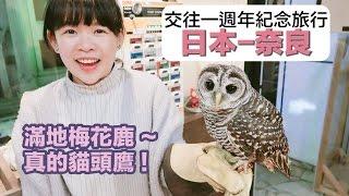情侶週年紀念旅行#2【日本-奈良】和真的貓頭鷹互動❤︎古娃娃WawaKu thumbnail