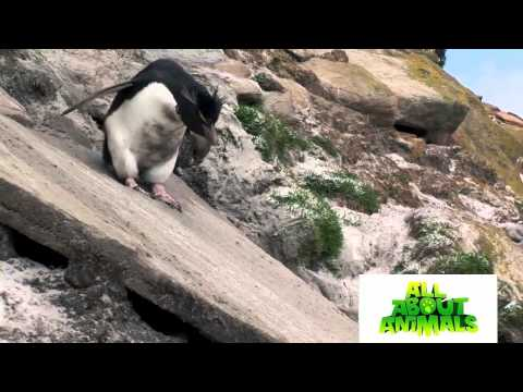Best Funny Animals Moments Around The World - Amazing Animals Moment 2014 Youtube HD
