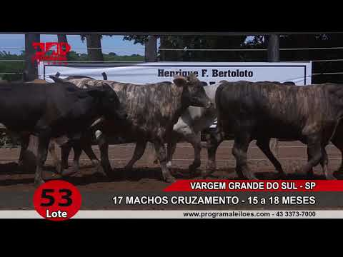 LOTE 053