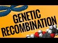 A3Academy: Genetic Recombination