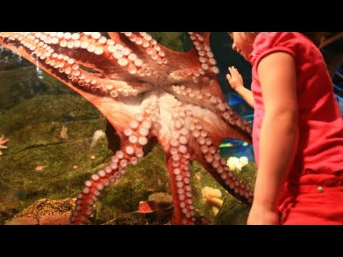 A Day After A Family Saved This Beached Octopus, It Returned And Gave Them An Astonishing Thank You