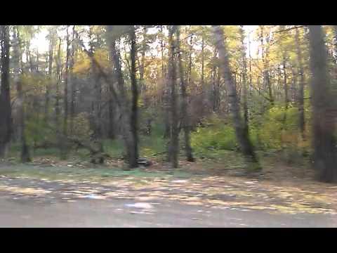 Еду домой/Деревья, красота лесов в Лыткарино