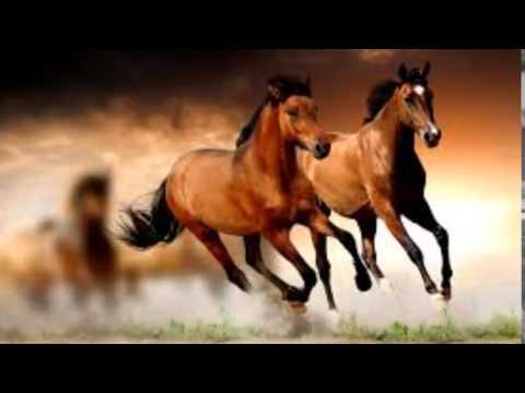 horse running sound effects - efek suara kuda berlari