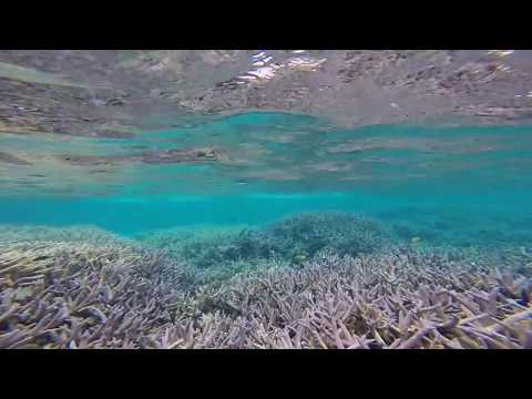 Tuvalu - Funafuti : Paava and Fualifeke islands
