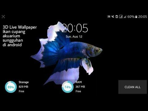 3d Live Wallpaper Ikan Cupang Di Hp Android Mini Aquarium