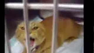 Забавные кошки и смешные котята,нарезка смешных видео