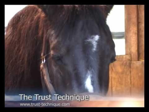 Trust Technique - Alfie