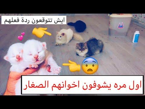 جمعت سكر وتايقر مع اخوانهم الصغار 😻 شوفوا ايش صار 😂💔 / Mohamed Vlog